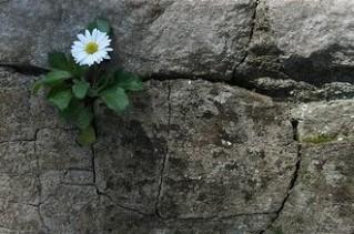 flower footpath